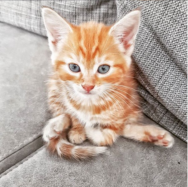kitten frits